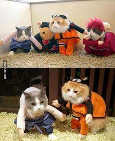 Naruto Catppuden. Catnobi Jitsu. - 9GAG