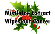 Mistletoe extract has been used numerous times to wipe out cancer from the body. Here are 2 real-life examples of mistletoe beating cancer.