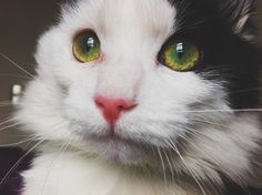832 Best Cats And Kittens Images On Pinterest Cut Animals Cute Kittens And Adorable Animals