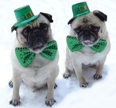 St. Patrick Day Pugs