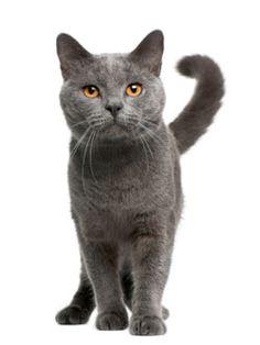 Caring for your cat #catsincarer - Care for cat at Catsincare.com!