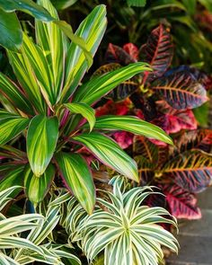 Tropical Backyard Landscaping, Tropical Patio, Tropical Garden Design, Florida Landscaping, Backyard Garden Landscape, Backyard Plants, Garden Landscape Design, Front Yard Landscaping, Tropical Plants