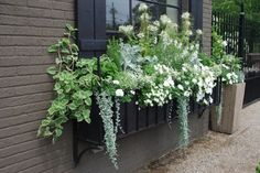 Window Box in White & Shades of Greens