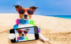 Herunterladen hintergrundbild hund, jack-russell-terrier -, reise -, selfie -, tourismus-konzepte, jagdhund