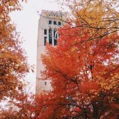 You can hear (and see) the Burton Memorial Tower recital from 12-12:30pm when classes are in session. Take the elevator, then climb 2 flights of stairs to the Observation Deck!