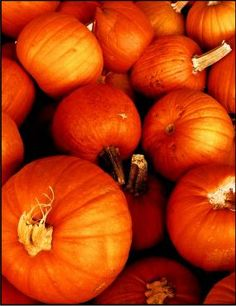 Photo by Amymillerphotos under the Creative Commons Attribution License 2.0.Click To Enlarge - How to grow pumpkins.