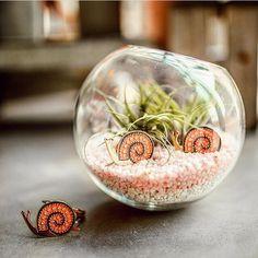 Enamel snail pins in their natural terrarium habitat via Snail, Terrarium, Studio, Natural, Floral, Shop, How To Make, Instagram, Terrariums