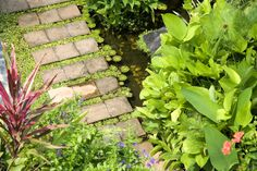 Tropical walkway with a small pond and bright green plants all around. Believe it or not, this project does not break the bank. #walkway #pond