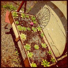 7 - Garden