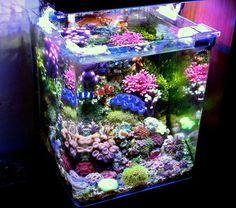 I am aiming this high. This is not mine. - A Particular Italian Nano Cube -- - Reef Central Online Community Aquarium Nano, Aquarium Marin, Coral Reef Aquarium, Aquarium Terrarium, Saltwater Aquarium Fish, Marine Aquarium, Small Saltwater Tank, Marine Fish Tanks, Marine Tank