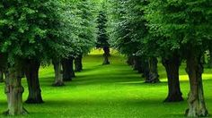 Trees absorb odors and pollutant gases (nitrogen oxides, ammonia, sulfur dioxide and ozone) and filter particulates out of the air by trapping them on their leaves and bark.