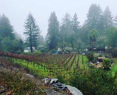 Ahhh rainy foggy Friday #ghettovineyard