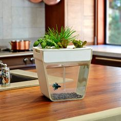 AquaFarm by Back to the Roots $59.99  Add some fun to your kitchen with the AquaFarm. This 3 gallon self cleaning fish tank also grows food, giving you a little ecosystem right in your kitchen.  With the AquaFarm, fish waste feeds the plants and plants clean the water. It's a simple, elegant way to grow your own food right on your counter top. The kit includes everything you need to get started – even a coupon for a betta fish.