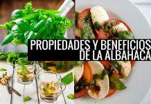Beneficios y propiedades de la albahaca
