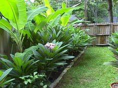 ever want to create a tropical paradise in your own backyard? Here are some pointers on how to do it. Brought to you by Banana Bart and Boca Joe Tropical Backyard, Tropical Landscaping, Tropical Plants, Backyard Landscaping, Tropical Gardens, Tropical Flowers, Backyard Ideas, Plumeria Care, Plumeria Flowers