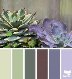 { succulent hues } image via: @swgardens