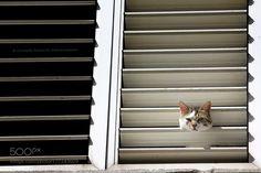 Cat curiosity by joexpo