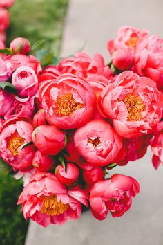 Gorgeous coral charm peonies, hoping they will be in season to blend with our deeper burgundy and cranberry tones.