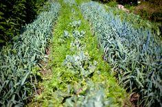 Les miracles de la permaculture. Partagé gracieusement par Deltadore.