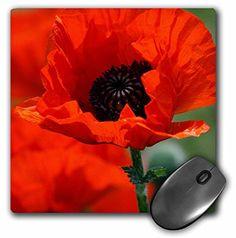 3dRose LLC 8 x 8 x 0.25 Inches Mouse Pad, Beautiful Red Poppy (mp_29205_1) 3dRose http://www.amazon.com/dp/B005K0GFAE/ref=cm_sw_r_pi_dp_K3fNvb14XG843