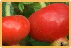 Ruusunmarja on syksyn yllättävä terveyspommi Vegetables, Food, Essen, Vegetable Recipes, Meals, Yemek, Veggies, Eten