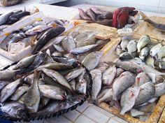 Fish market, Al Khor, Qatar