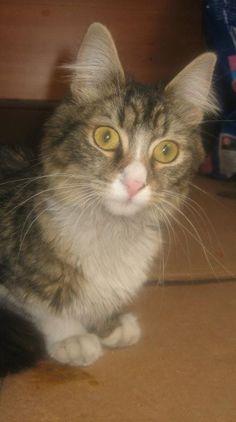 Aisha. Adoptada!