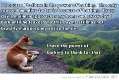 The Power Of Barking {funny}