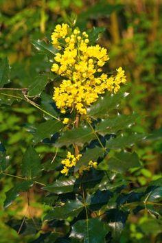 Herbal Medicine, Natural Healing, Herbalism, Diy And Crafts, Herbs, Nature, Massage, Gardening, Herbal Plants