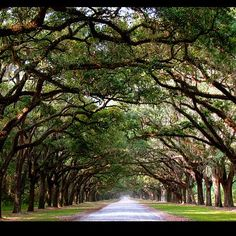 Wormsloe Plantation Historic Site Is One Of The Best Things To Do In Savannah Ga