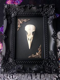 Crow skull framed in a ornate black gothic frame by Colournine