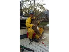 Firefighters help a fawn injured in the fire. To date no human injuries are reported - Wednesday June 27th