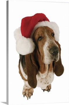 de466f5123b6 Premium Thick-Wrap Canvas Wall Art Print entitled Basset Hound displaying a  Santa hat,