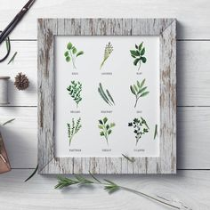 ★ KITCHEN HERBS ★ green culinary botanical watercolor print. Basil, Oregano, Sage, Cilantro, Rosemary, Parsley, Marjoram, Mint & Lavender french herbs for the kitchen, dining room, summer cottage or just a cute gift for a woman!