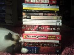 Steinbeck the cat noms on a pile of new reads