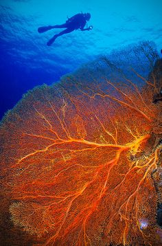 Underwater Palau  by Antonio Husadel