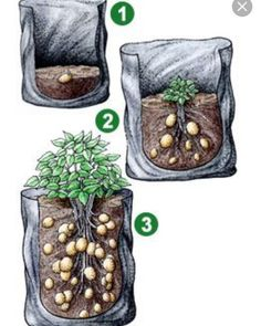 Grow your own potatoes in your bag with these tips – Growing Potatoes - Growing Plants at Home Grow Potatoes In Container, Planting Potatoes, Regrow Vegetables, Growing Vegetables, Growing Sweet Potatoes, How To Store Potatoes, Home Vegetable Garden, Edible Garden, Organic Gardening