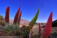 Flowers of the volcano - Francisco Mingorance - Wildlife Photographer of the Year 2010 : In Praise of Plants and Fungi - Highly commended
