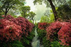 International Garden Photographer of the Year - Competition 9 | Trees, Woods & Forests Winners