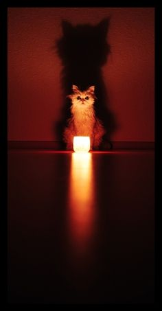 cat candle - Google Search