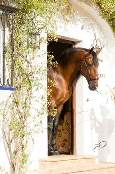 A pretty horse and barn.