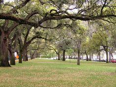 Spanish Moss, Emmet Park, Savannah. Named after Robert Emmet, Irish Patriot and Orator