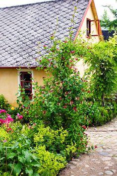 """""""Ungarna älskar när vi campar i orangeriet och det är en given plats för sommarens alla kalas"""", berättar Lennart Gisselsson. Lennart, som är den mest aktiva i trädgården, har varit mån om att det ska finnas lekplatser för barnen och gott om ätbart som de och deras kompisar kan stoppa i munnen. Här och var står odlingslådor med jordgubbar och rabarber. Han har också byggt en liten lekstuga i gammal stil och en Madickengunga som är skön att gunga i. Vacker kaprifolbåge framför huset."""