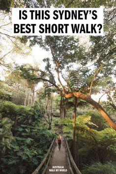 Cremorne Point Walk: the best short walk in Sydney — Walk My World Sydney Australia, Australia Travel, Western Australia, Solo Travel, Travel Oz, Travel Tips, Places To Travel, Places To See, Visit Sydney