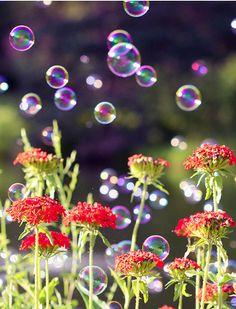 BUBBLES ~ FLOWERS Dew Drops, Rain Drops, Water Drops, Soap Bubbles, Heart Bubbles, Bubble Balloons, Blowing Bubbles, Simple Pleasures, Macro Photography