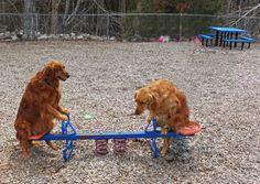 """Maddie trying to figure out this contraption at the playground. Ziva says: """"C'mon Maddie, You can do it!"""""""