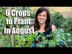 6 Crops to Plant in August for Late Summer Harvest 🌿🍅🥒 - YouTube