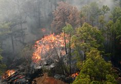 Texas Parks and Wildlife added 6 new photos to the album 1 Year After the Fire: Bastrop State Park Recovers.