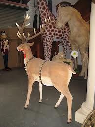 display reindeer - Google Search