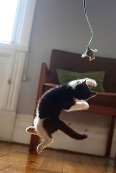 In training for the cat-o-lympics